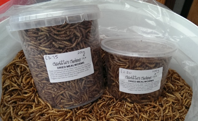 mealworms2
